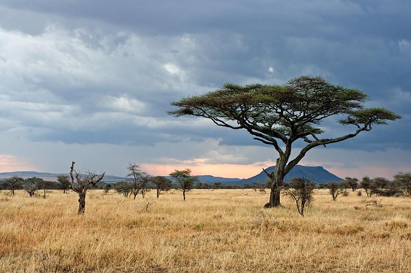 Conseils pour organiser un safari Photo au Kenya