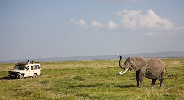Comment organiser un safari photo Kenya
